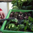 Watering Seedlings — Stock Video