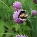 Bumblebee on flower — Stock Photo #28084345