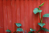 The leaves are on the fence — Stock Photo