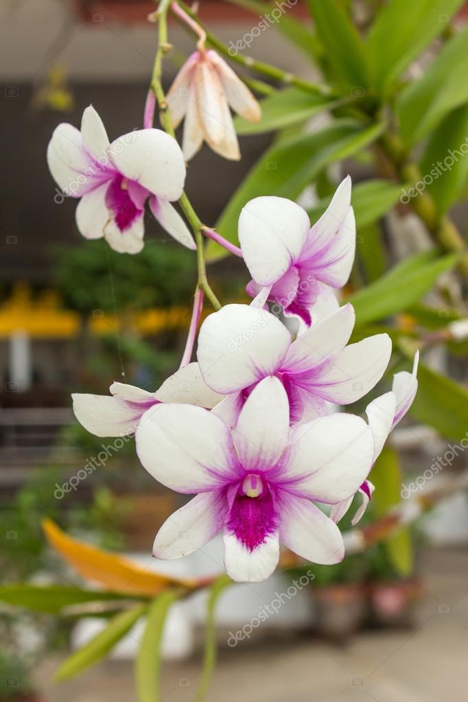 Orquídeas moradas y blancas \u2014 Foto de Stock 30261969