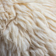 Fleece sheep background — Stock Photo #36478161