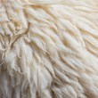 Fleece sheep background — Stock Photo