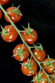Tomatoes on black background — Stock Photo