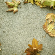 Background cement with dry leaves. autumn — Stock Photo