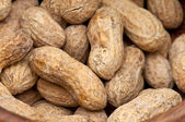 Peanuts Background Close up — Stock Photo