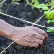 Gardening Hands — Stock Photo
