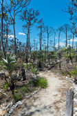 Trail on National Key Deer Refuge — Stock Photo