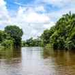 Frio River in Costa Rica jungle. - Stock Photo