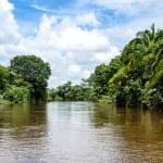 Frio River in Costa Rica jungle. — Stock Photo #24276149