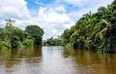 Frio River in Costa Rica jungle. — Stock Photo