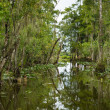 River in Everglades — Stock Photo #24281229