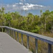 Stock Photo: Walking trail in Shark Valley, Eveglades National Park