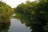 Typical Landscape at Everglades National Park — Stock Photo