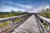 Anhinga Trail — Stock Photo