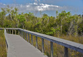Walking trail in Shark Valley Eveglades National Park — Stock Photo