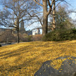 Central Park in Yellow II — Stock Photo