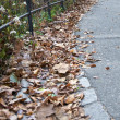 Stock Photo: Central Park leafs.