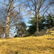 Stock Photo: Central Park in Yellow.