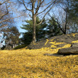 Stock Photo: Central Park in Yellow III