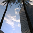 Skyscrapers and palms — Stockfoto