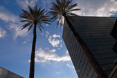 Highrise and palms — Stock Photo