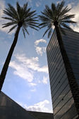 Skyscrapers and palms — Stock Photo