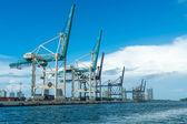 Cranes of the Miami Seaport — Stock Photo