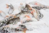 Winter fishing — Stock Photo