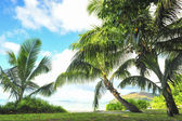 One of the beautiful Islands from the Seychelles — Stock Photo