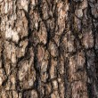 Spruce bark — Stock Photo