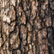 Spruce bark — Stock Photo #30969571