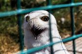Biała sowa — Zdjęcie stockowe