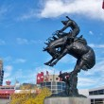 Calgary Stampede — Stock Photo