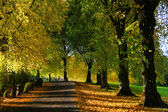 Autumn Colors — Zdjęcie stockowe