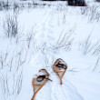 Snowshoes on the trail - Stock Photo