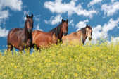 Horses on a summer day — Stock Photo
