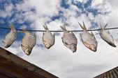 Stockfish — Stock Photo