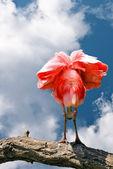 Belo pássaro-de-rosa sobre o fundo do céu azul — Fotografia Stock