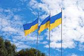Ukrajinské vlajky — Stock fotografie