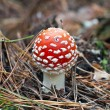 The fly agaric in autumn forest — Stock Photo