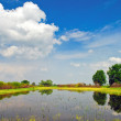 Stock Photo: Beautiful spring landscape and water meadow