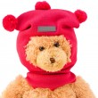 Teddy bear in winter knitted hat with pompons — Stock Photo