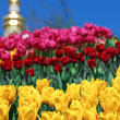 Tulips on the background of orthodox church — Stock Photo
