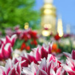 Beautiful pink and white tulips on the background of Orthodox church dome — Stock Photo #45459213