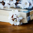 Book and blossoming branc — Stock Photo #49319803