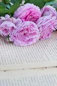 Rosa y un libro antiguo — Foto de Stock