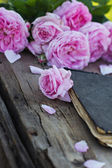 Rose and an antique book — Stock Photo