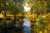 Belo lago na floresta. — Foto Stock
