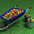 Bucket of apples — Stock Photo
