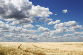 The road to a field under clouds — Stock Photo